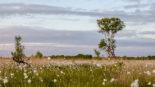 """Optimierung der Vernässung  des Naturschutzgebietes  """"Bockholter Dose"""""""